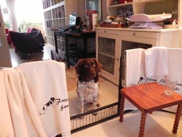 Jessie, wanneer mag ik bij de puppies kijken?
