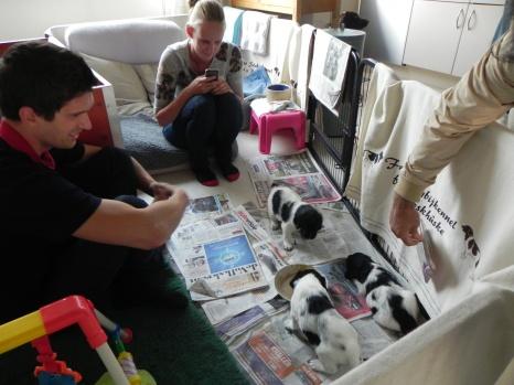 Helemaal verliefd op de puppy's