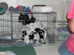 Jessie inspecteerde de Bench