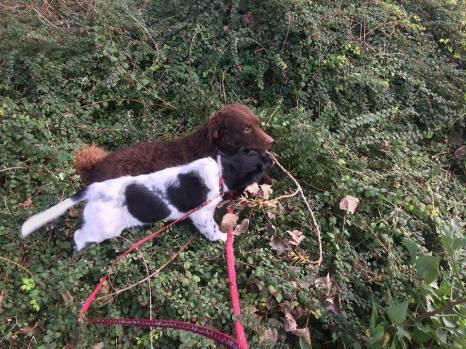 Fayke en Pina, niet door de struiken maar er over heen.