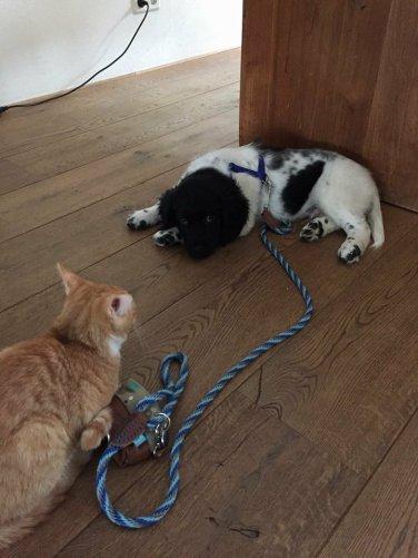 Borre ontmoet kat