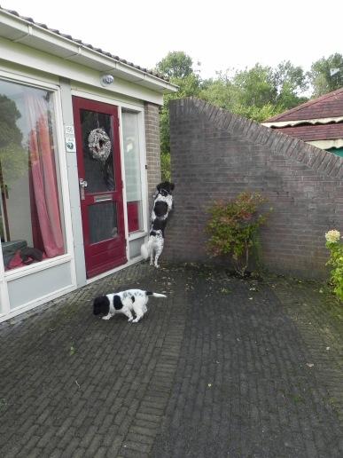 gluren bij de buren